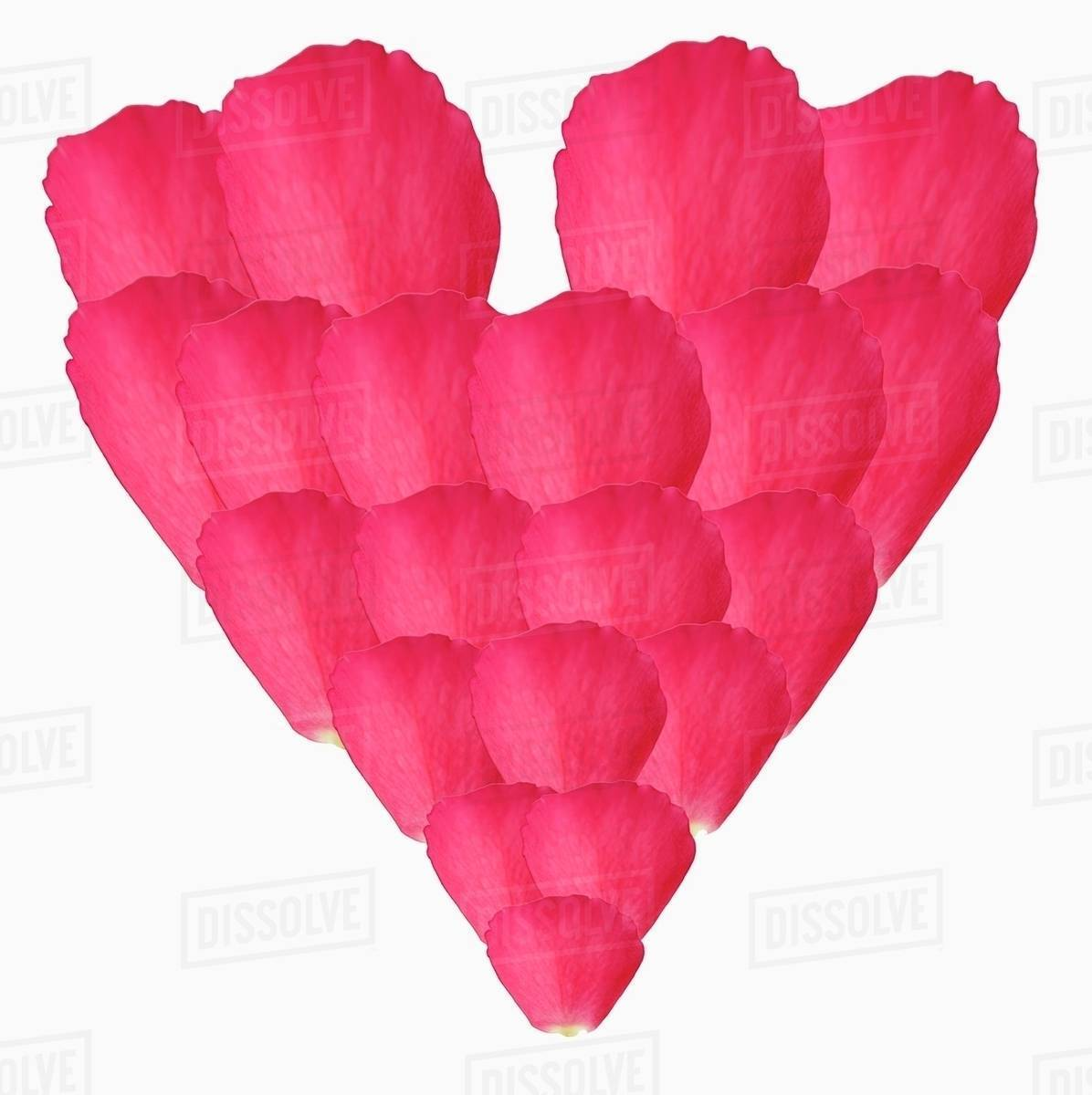 Heart Made From Pink Rose Petals Stock Photo Dissolve