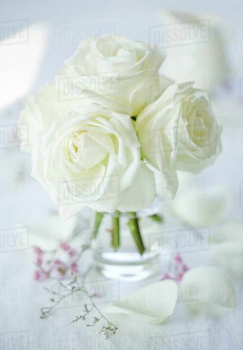 A Bunch Of White Roses In A Glass Vase Stock Photo Dissolve