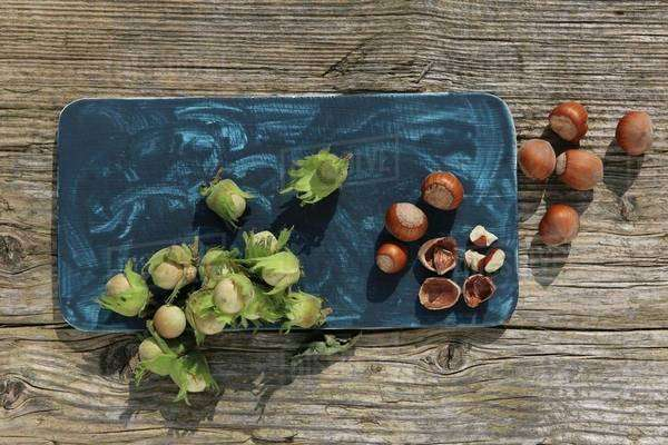 Green hazelnuts from a bush and ripe brown hazelnuts with one cracked Royalty-free stock photo