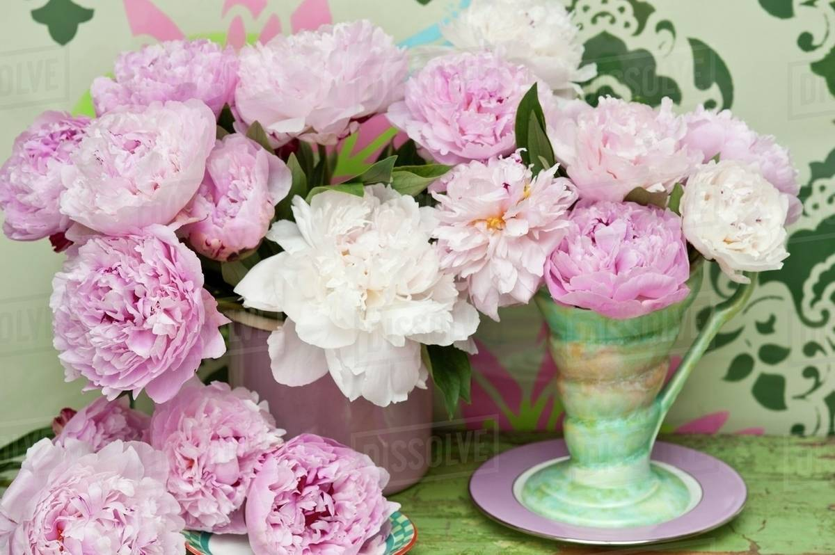 Pink And White Peonies In A Retro Vase In Front Of A Wall Painted