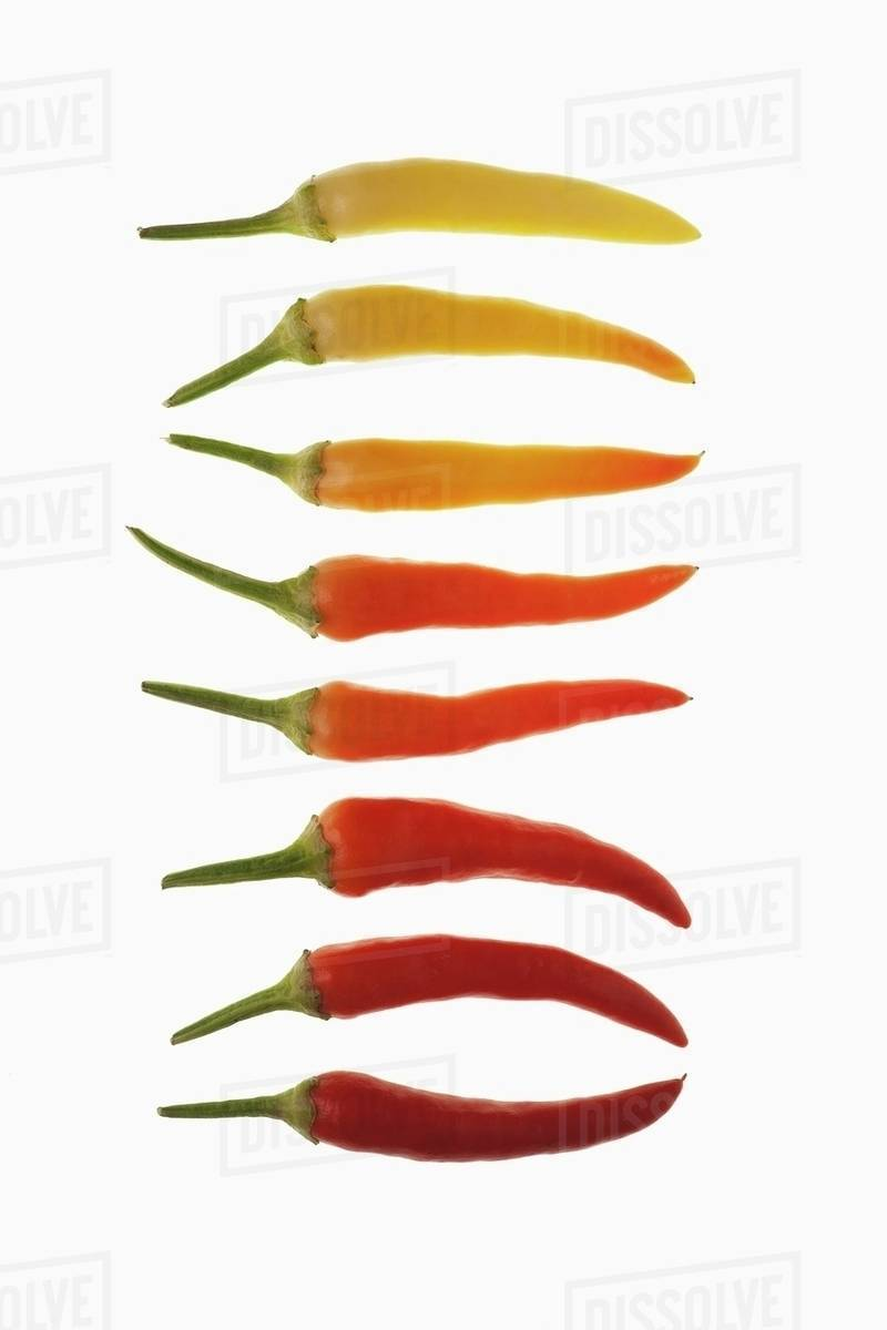 5ac436f2615d A row of chilli peppers (ripe and unripe) - Stock Photo - Dissolve