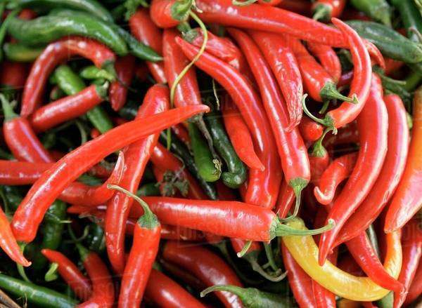 Red and green chillies and one yellow chilli Royalty-free stock photo