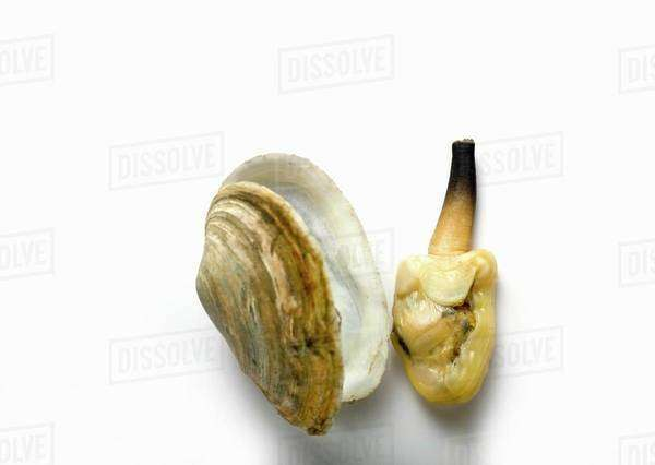 Clam beside shell Royalty-free stock photo