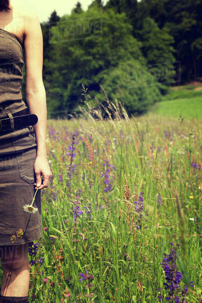 Woman standing on a flower meadow holding blossom in her hand, partial view Rights-managed stock photo