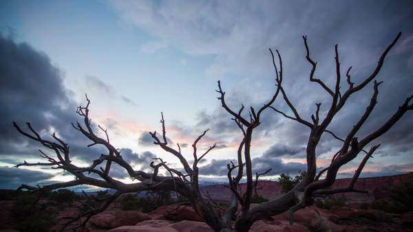 Timelapse in Capitol Reef at sunset with tree silhouetted against the sky. Royalty-free stock video