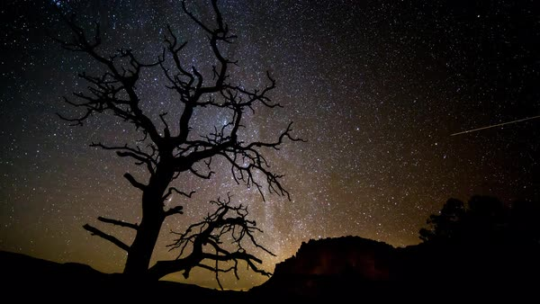 Night timelapse of an old tree up against the sky as stars circles above in the desert of Capitol Reef Utah. Royalty-free stock video