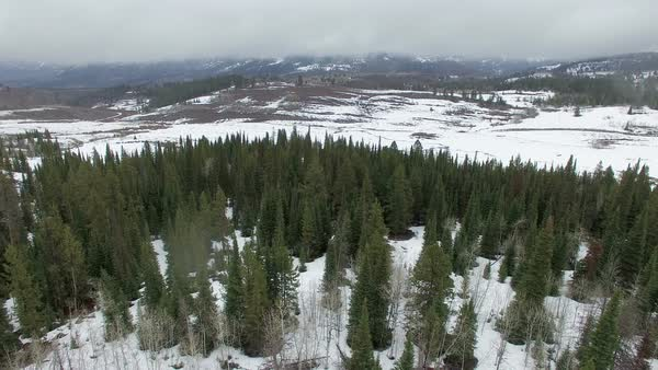 Flying view over snow and pine trees passing more trees. Royalty-free stock video