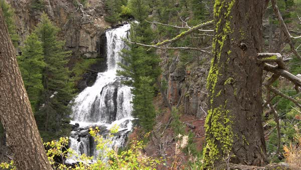 View of waterfall through green forest in Yellowstone. Royalty-free stock video