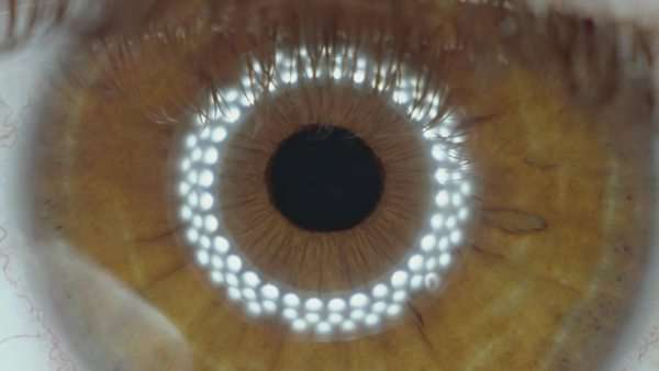Extreme close-up shot of the iris of the brown eye of a human male, contracting when light is shined into. Led ring light mirrored in the pupil. Royalty-free stock video