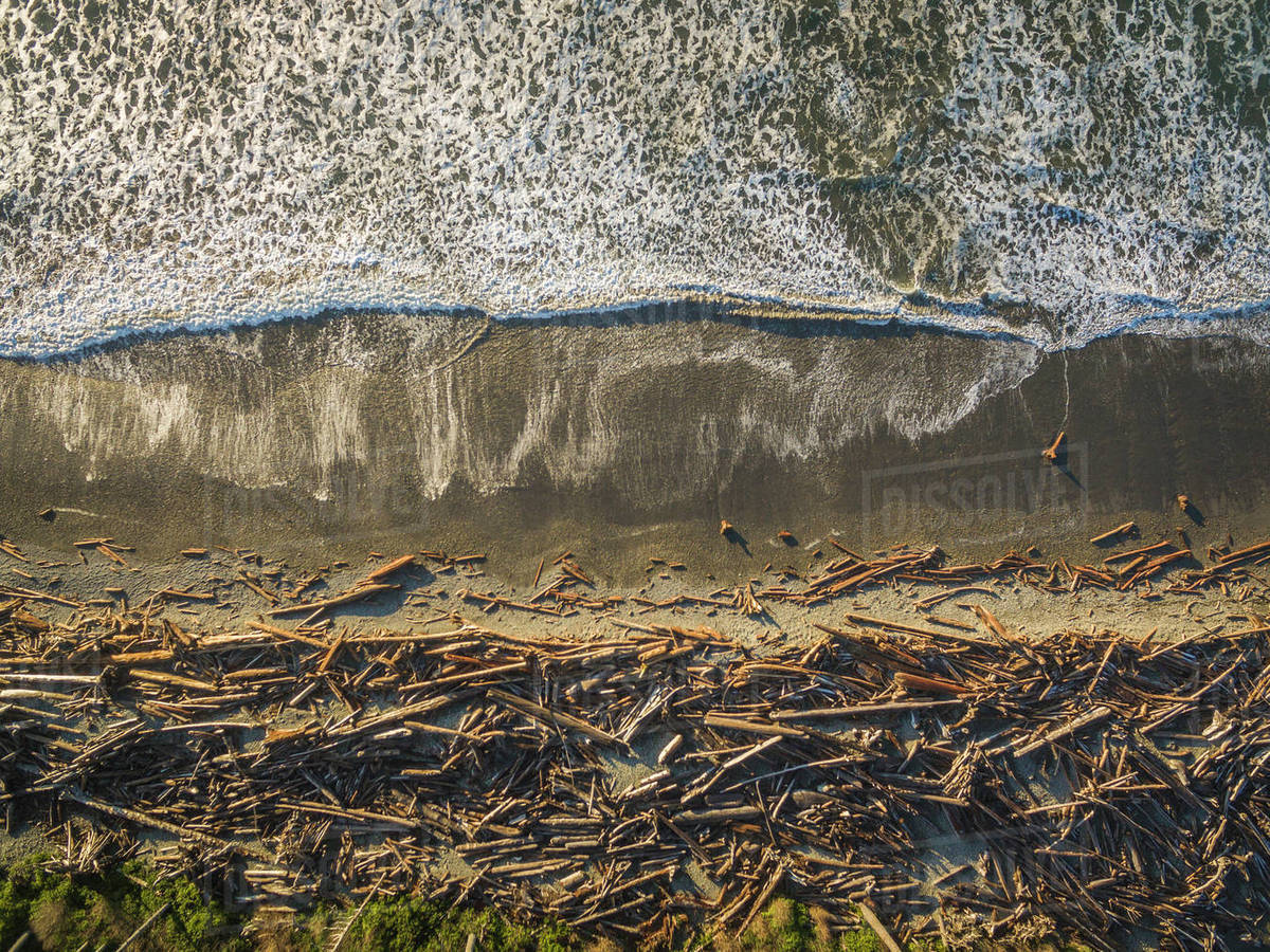 Piles Of Driftwood On The Beach At Forks Washington