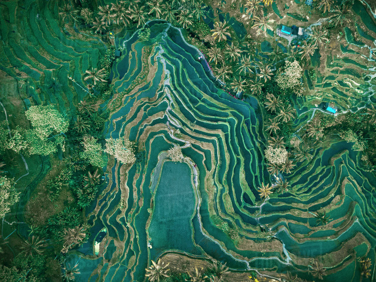 aerial view of rice terraces  tegallalang  bali  indonesia