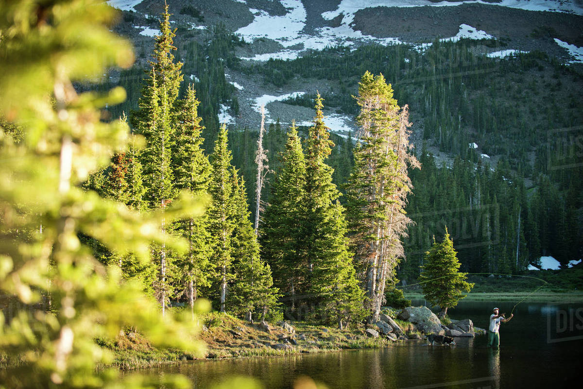 A fly fisherman in a high alpine lake at sunset.  Royalty-free stock photo