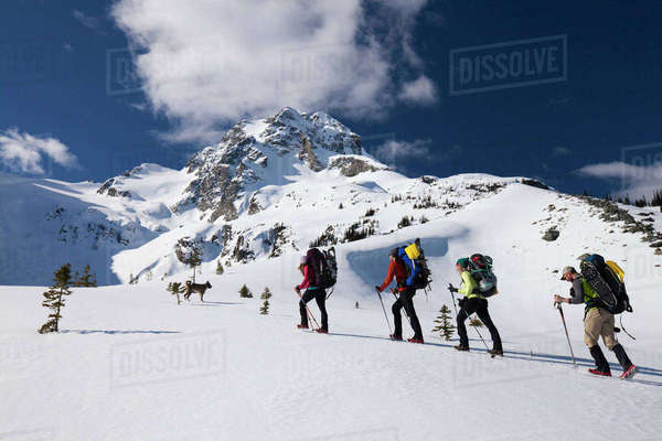 Four climbers follow a dog towards the summit of Joffre Peak. Royalty-free stock photo