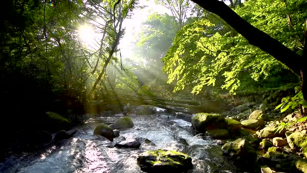 Water stream, Tochigi Prefecture, Japan Royalty-free stock video