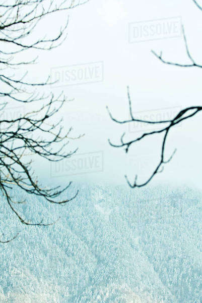 Misty mountainside, bare branches in foreground Royalty-free stock photo