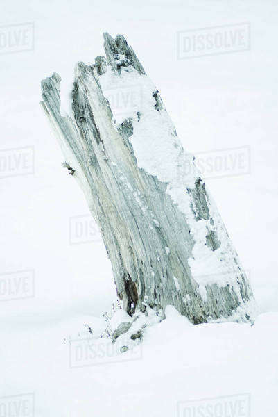 Driftwood in snow Royalty-free stock photo