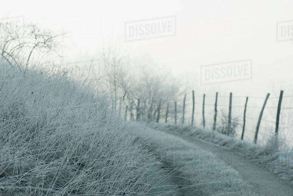 Frost covered landscape Royalty-free stock photo