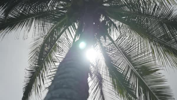 Low-angle shot of a palm tree Royalty-free stock video