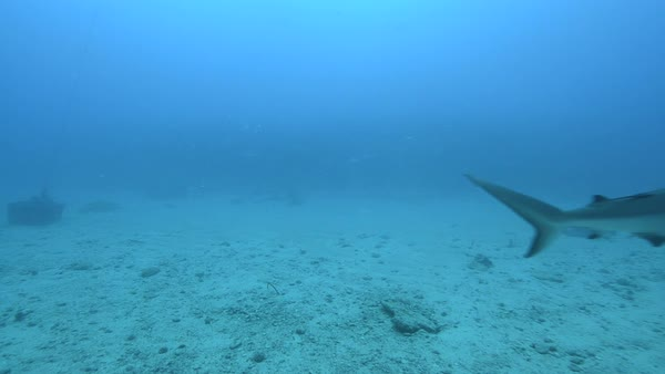 Hand-held shot of a shark underwater Rights-managed stock video