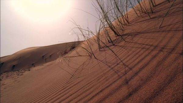 Sahara Desert, Africa Rights-managed stock video