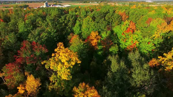 Amazingly scenic autumn colors of Wisconsin, aerial flyover view. Royalty-free stock video