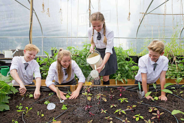Middle school students with watering can watering plant seedlings in greenhouse Royalty-free stock photo