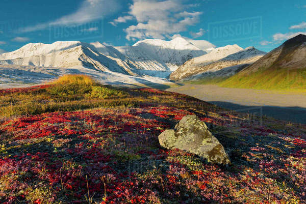 Scenic Autumn View Of The Snow Capped Alaska Range With Colorful Tundra In The Foreground, Interior Alaska, USA Rights-managed stock photo
