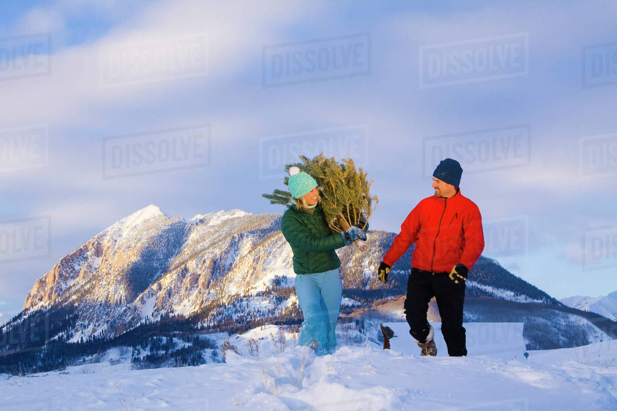 Christmas In Colorado Mountains.Couple Carrying A Christmas Tree Home Near Crested Butte Colorado Rocky Mountains Winter Stock Photo