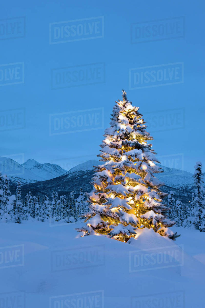 Christmas Tree Backgrounds.Christmas Tree Standing On Snow Covered Tundra At Twilight Chugach Mountains In The Background Winter Anchorage Alaska Stock Photo