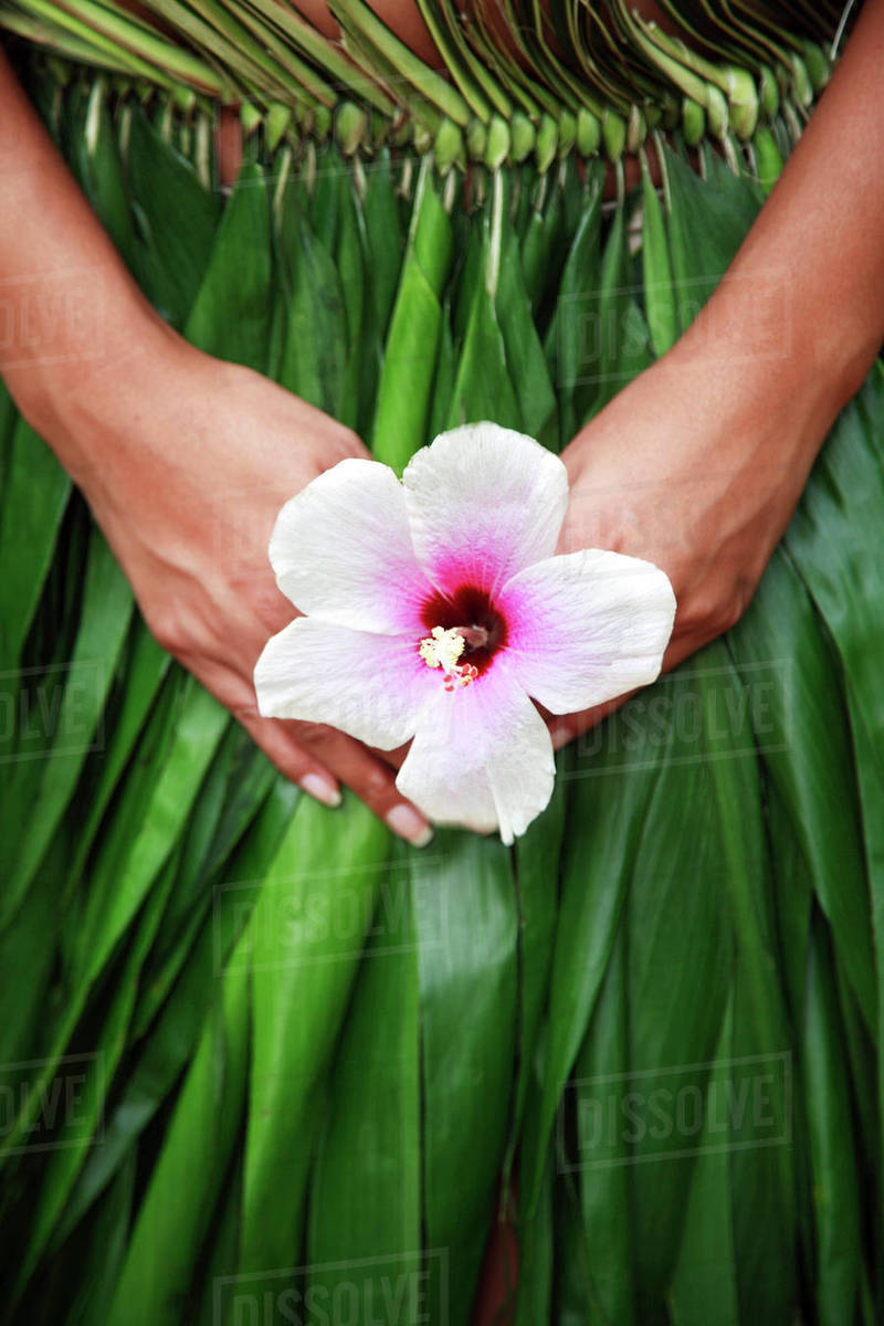 Hawaii Oahu Closeup Of Hula Dancer Hands Holding A White Hibiscus