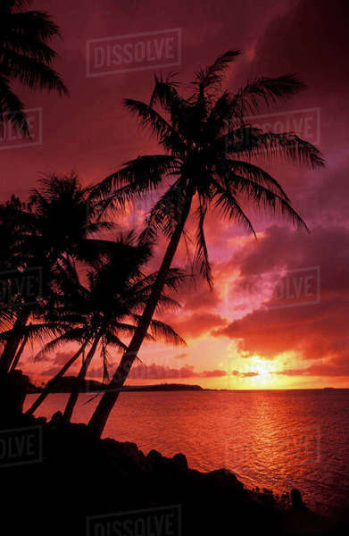 Guam, Tumon Bay, Bright Red Sunset And Silhouetted Palms On Beach. Rights-managed stock photo