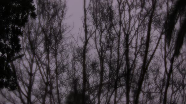 Out of focus shot of trees swaying in breeze Royalty-free stock video
