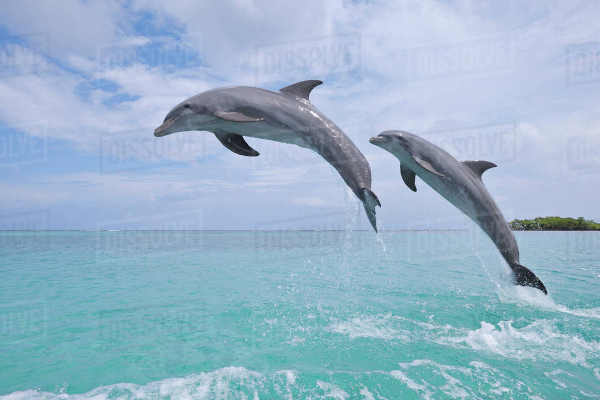 """Image result for dolphins jumping"""""""