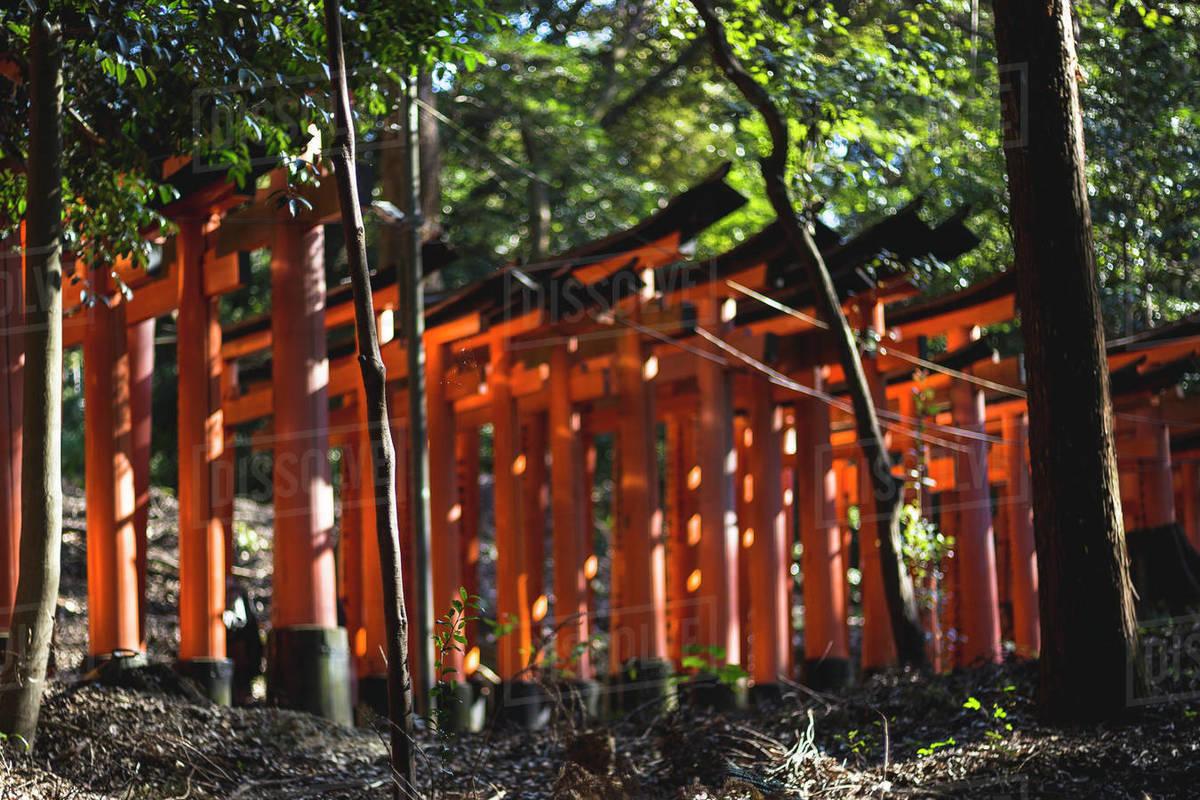 Torii Gates at Fushimi Inari Shrine in Kyoto Japan Royalty-free stock photo