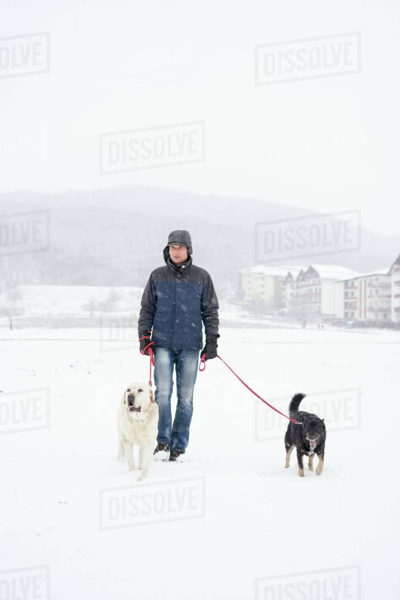 Adult Man walking with dogs in nature in winter Royalty-free stock photo