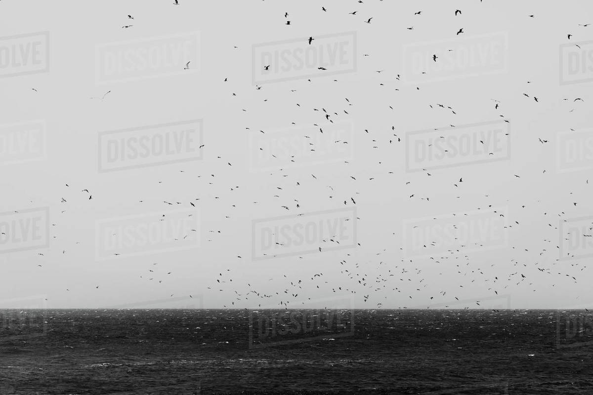 Many birds flying on a stormy day Royalty-free stock photo