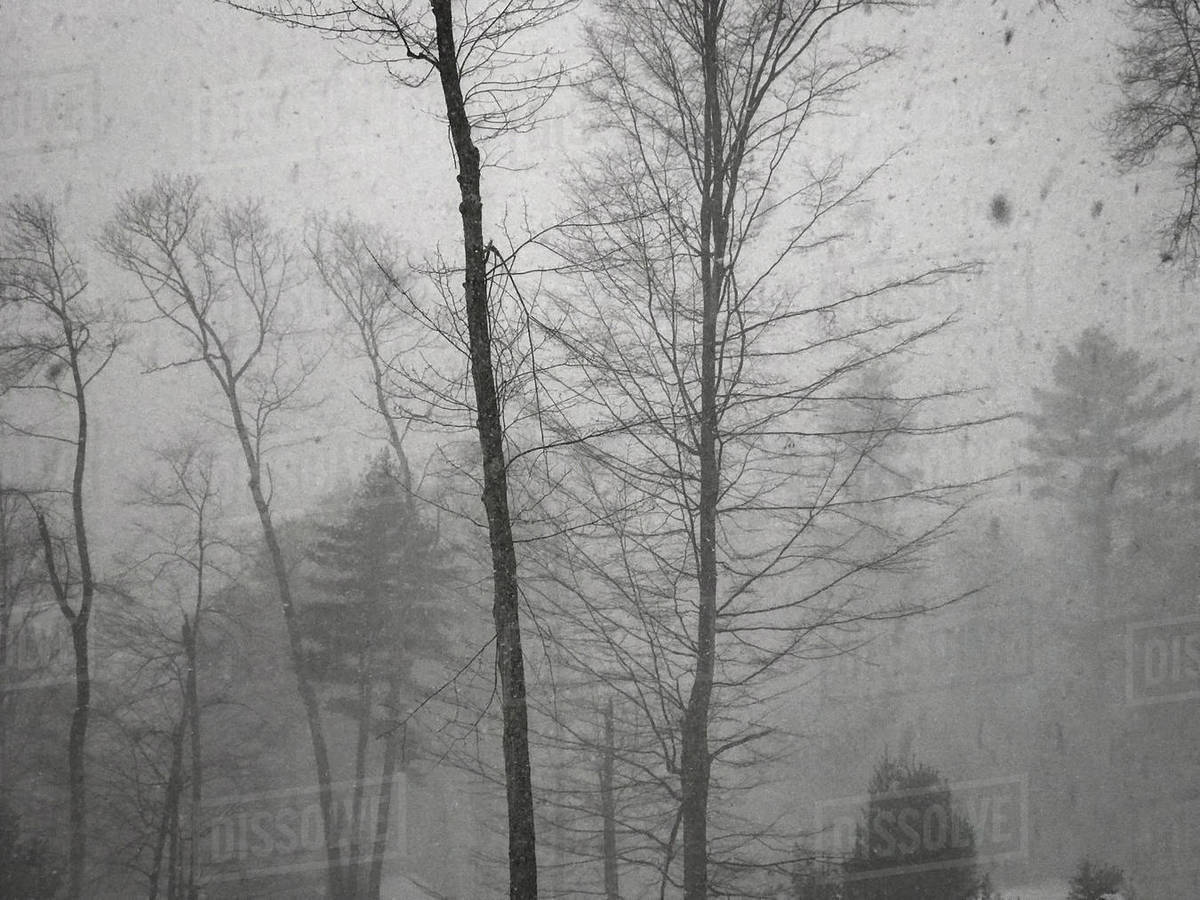 Winter storm in woods with heavy blizzard snowfall Royalty-free stock photo