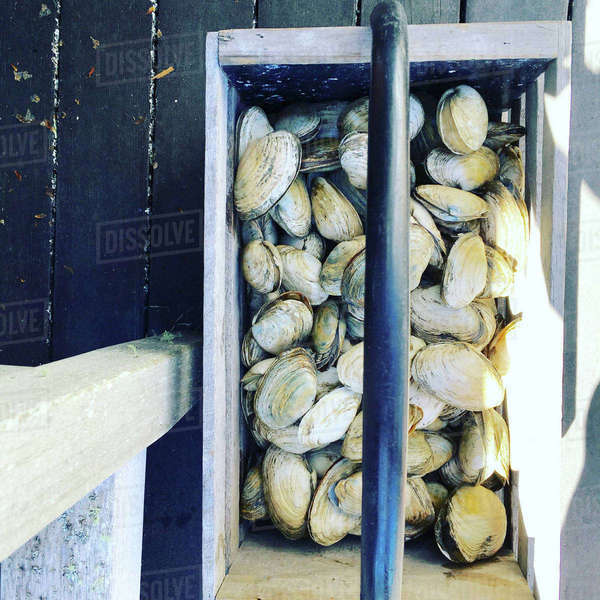 Overhead view of clams in box on jetty Royalty-free stock photo