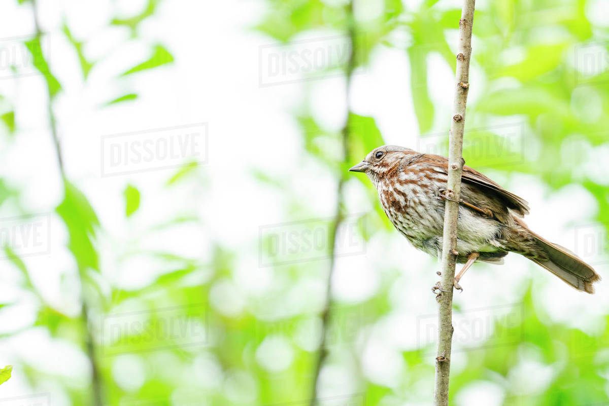 View from below of a sparrow sitting on a tree branch Royalty-free stock photo
