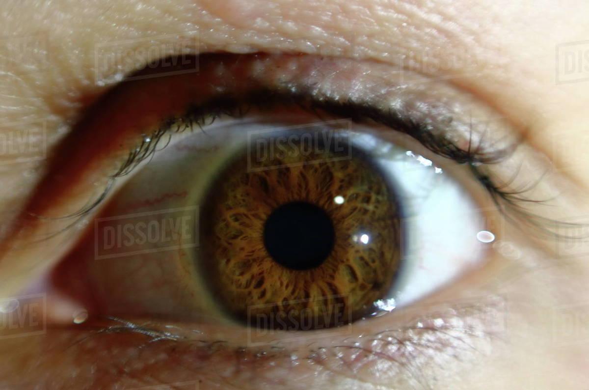 Macro close up of brown eye iris Royalty-free stock photo