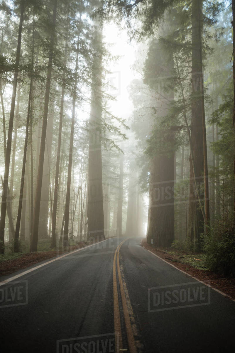 Foggy Redwoods Road Royalty-free stock photo