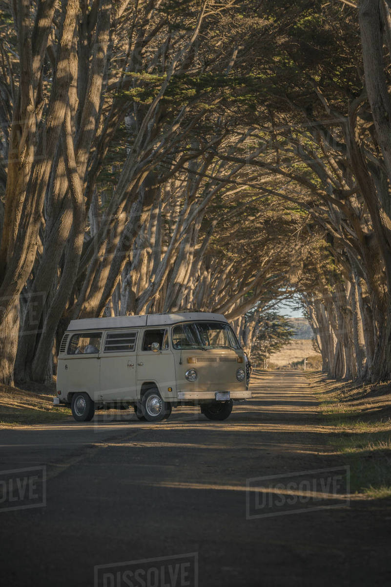 Bus in Tree Tunnel Royalty-free stock photo