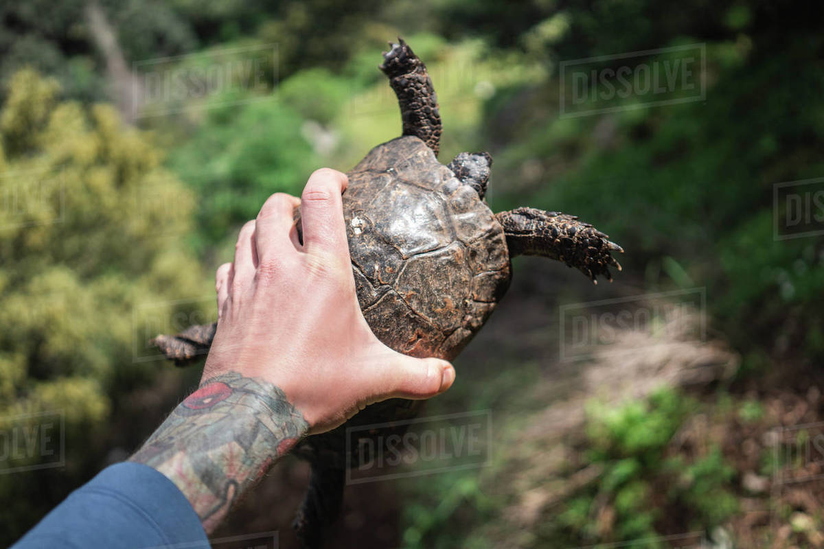 Close-up of male hand holding turtle against green grass outdoors Royalty-free stock photo