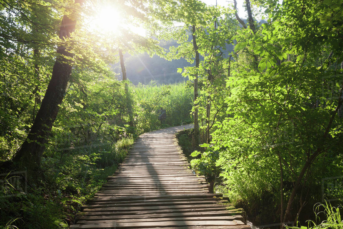 Wooden path across the river at sunny morning Royalty-free stock photo