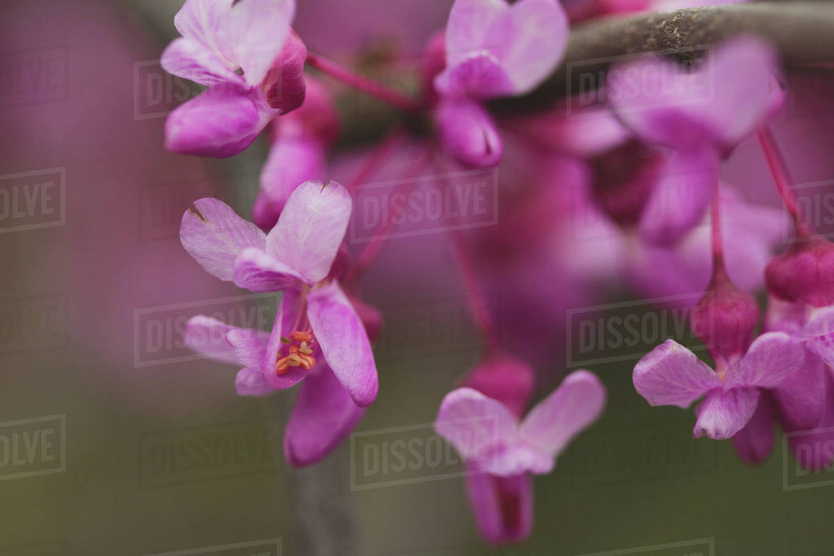 Pink flower blooms on a tree branch Royalty-free stock photo