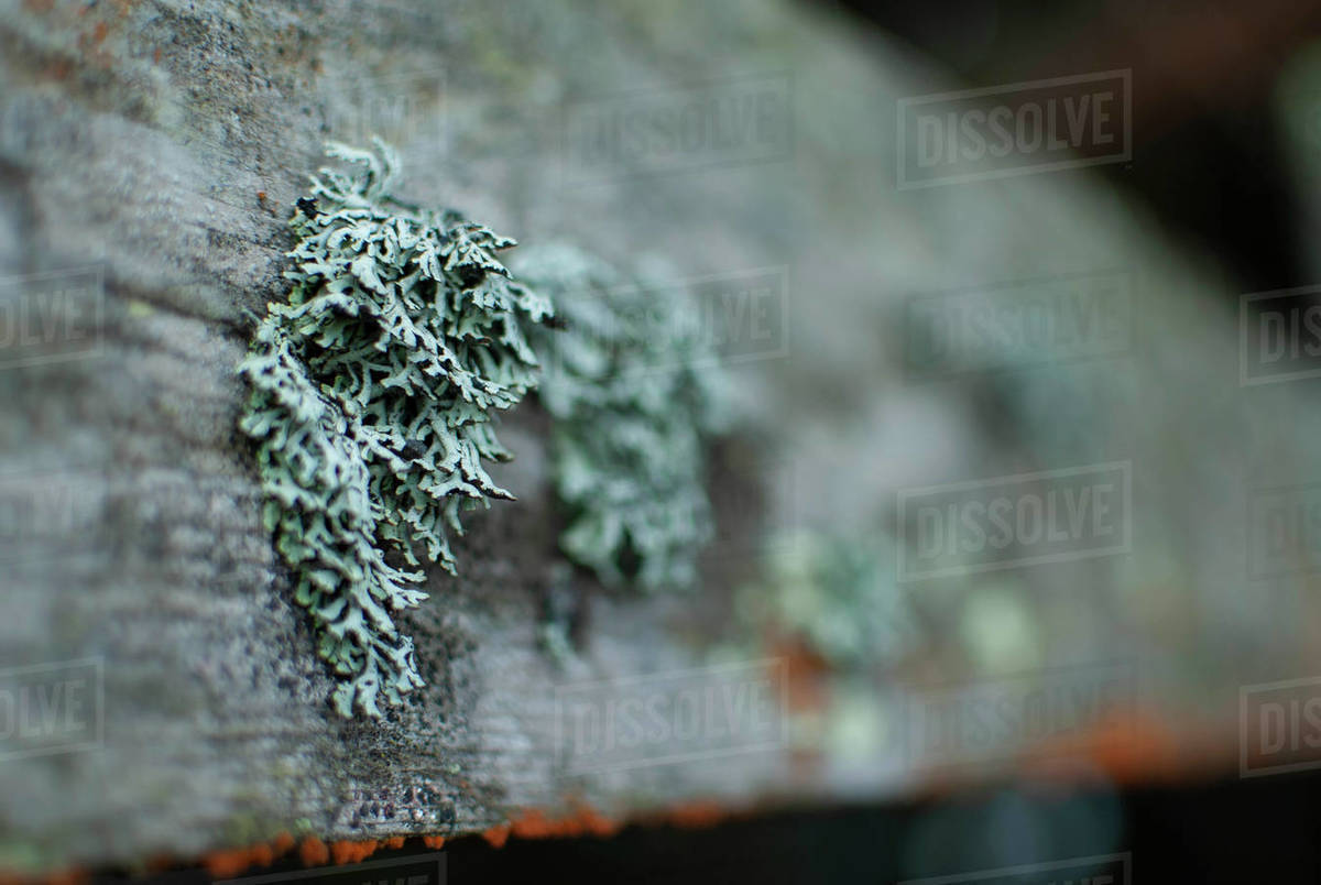 Colorful lichen grows on wood Royalty-free stock photo