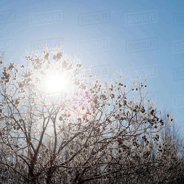 Trees against clear sky Royalty-free stock photo