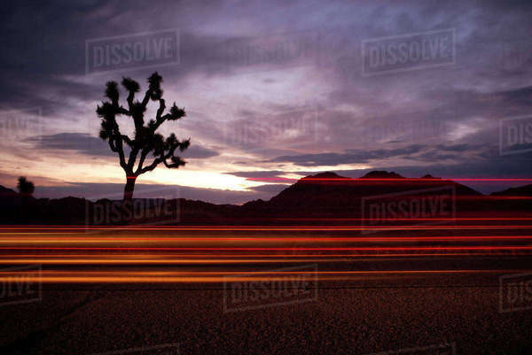 Light trails at Joshua Tree National Park against cloudy sky during sunset Royalty-free stock photo