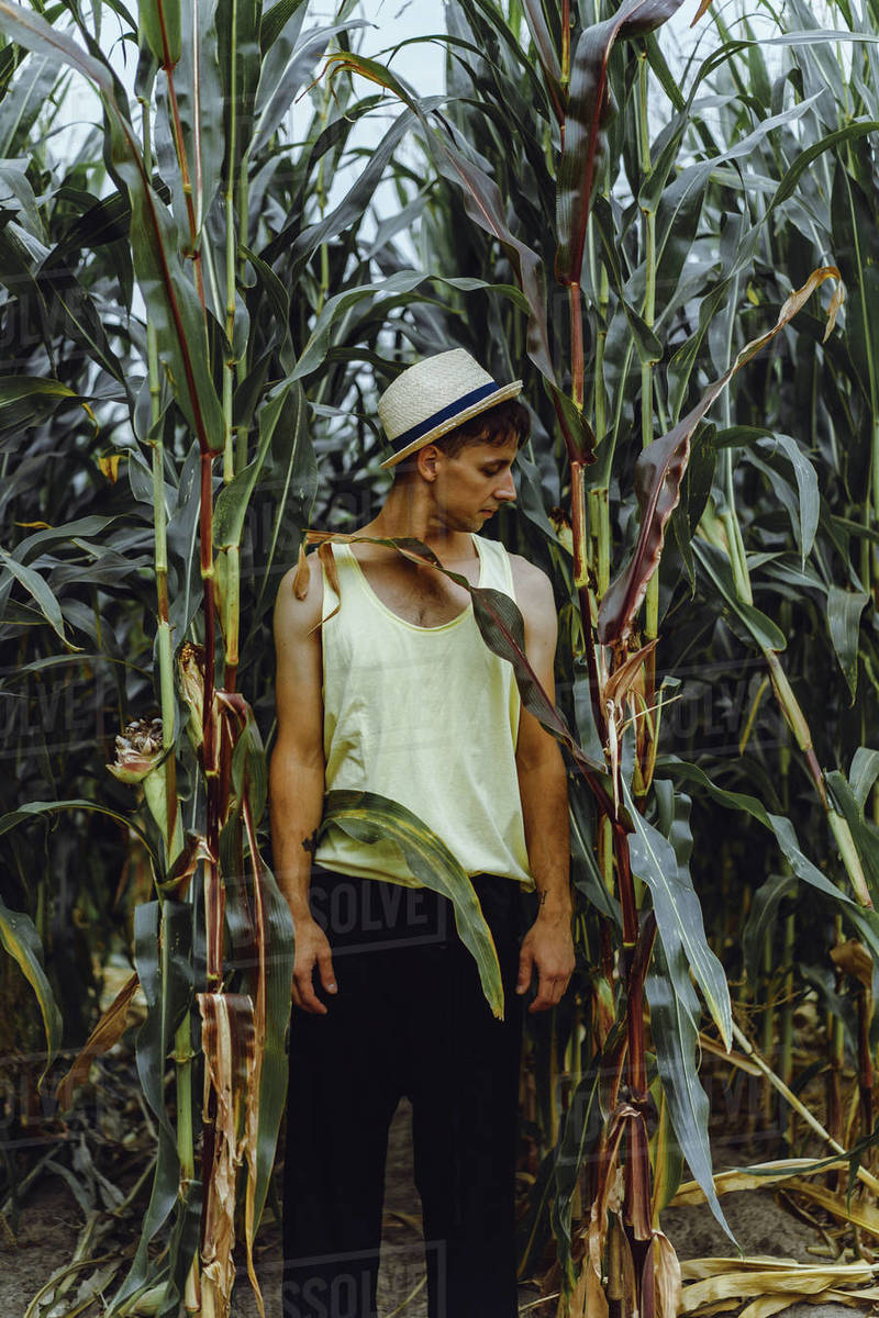 Portrait of a farm man in a hat in a green field picking up the corn. Royalty-free stock photo