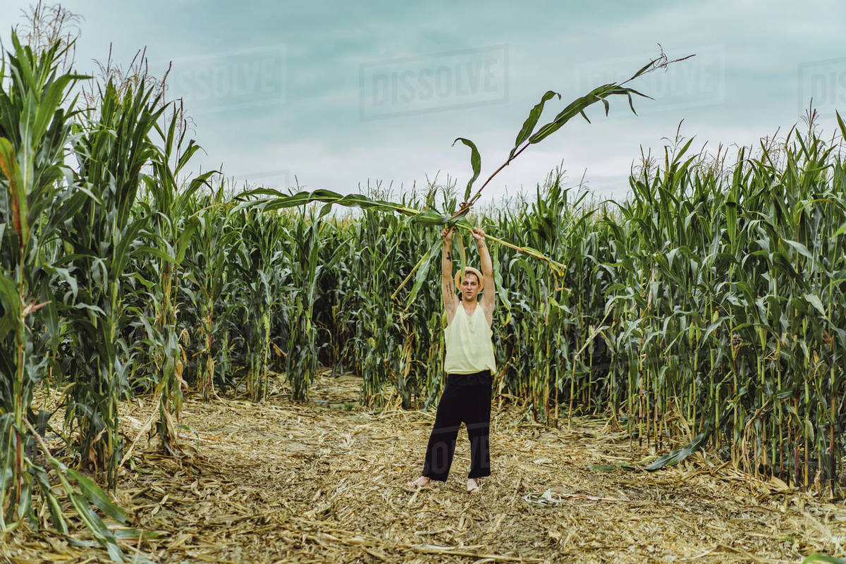 Farm man in a hat standing in a green field holding up corn stalks. Royalty-free stock photo